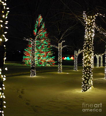 Holiday Lights At Chicago Botanic Garden Poster by Nancy Mueller