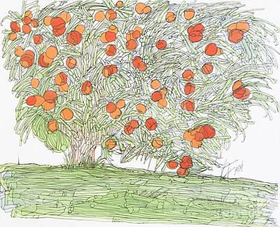 Holland Citrus Tree Poster