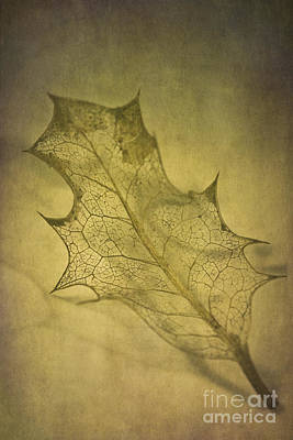 Holly Leaf Poster by Jan Bickerton
