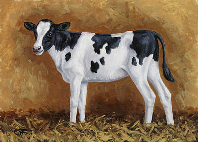 Holstein Calf Poster by Crista Forest