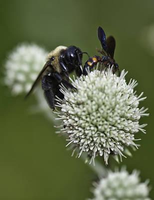Honey Bee 0001 Poster