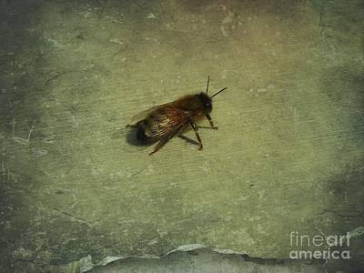 Poster featuring the photograph Honey Bee by Kristine Nora