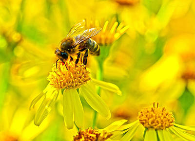 Honey Colours Poster