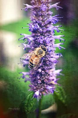 Honeybee On Hyssop Poster