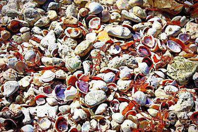 Honeymoon Island Shells - Digital Art Poster by Carol Groenen