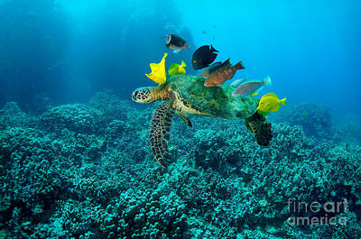 Honu Cleaning Station Poster by Aaron Whittemore