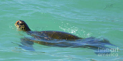 Poster featuring the photograph Honu II by Suzette Kallen