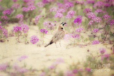 Horned Lark In Wildflowers Poster by Susan Gary