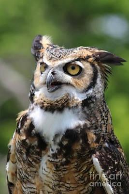 Horned Owl Poster