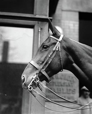 Horse, 1921 Poster by Granger