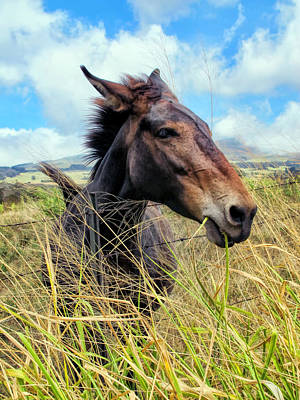 Poster featuring the photograph Horse 6 by Dawn Eshelman
