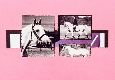 Horse And Rider C Poster