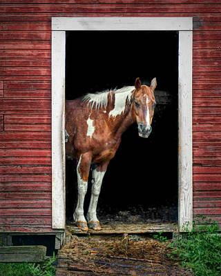 Horse - Barn Door Poster by Nikolyn McDonald