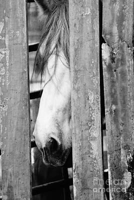 Horse Board 3 Poster by Lynda Dawson-Youngclaus