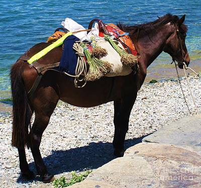Horse By The Beach In Mykonos Greece Poster