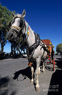 Horse Carriage In Aegina Island Poster