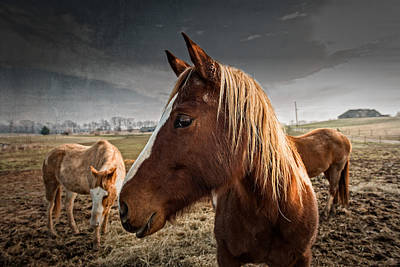 Horse Composition Poster by Brett Engle