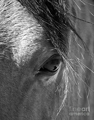 Horse Eye In Black And White Poster
