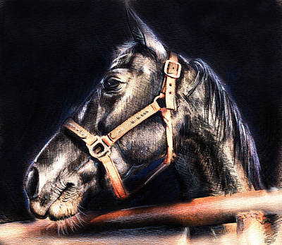 Horse Face - Pencil Drawing Poster