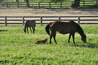 Horse Family Grazing Poster by Bill Cannon