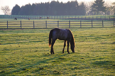 Horse Grazing In The Morning Poster by Bill Cannon