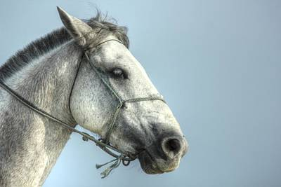 Horse Head-shot Poster