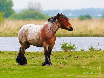 Horse In A Meadow Poster