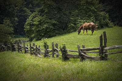 Horse In A Pasture Along The Blue Ridge Parkway Poster by Randall Nyhof