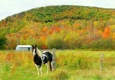 Horse In Autumn Field Poster