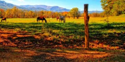Horse In The Autumn Pasture Poster