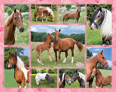 Horse Multipic Poster