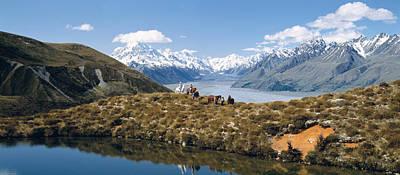 Horse Trekking Mt Cook New Zealand Poster