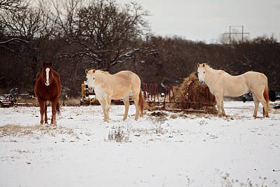 Horse Trio In The Snow Poster by Toni Hopper