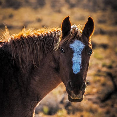 Horse With Backlight Poster by Paul Freidlund