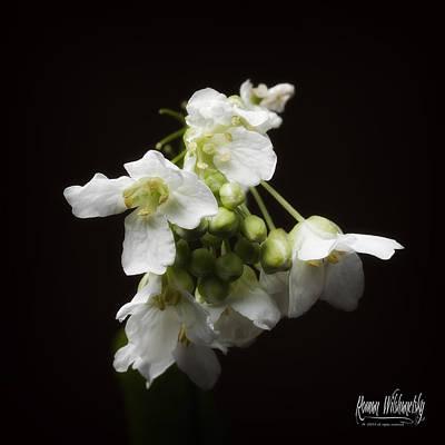 Horseradish Bloom Poster