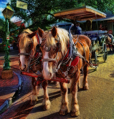 Horses - The Clydesdale Stallions Poster