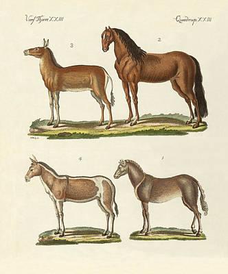 Horses And Donkeys Poster