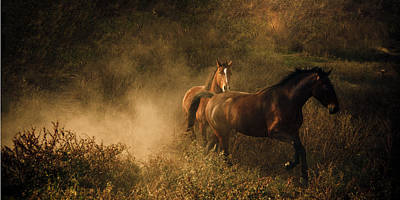 Horses At Play In The Dust Poster by Leslie Heemsbergen