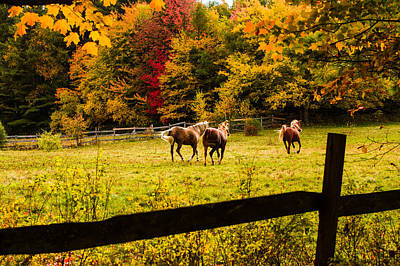 Horses Frolicking In The Paddock Poster by Jeff Folger
