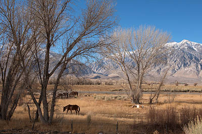 Horses Graze Beside The Owens River Near Bishop Poster by Carol M Highsmith