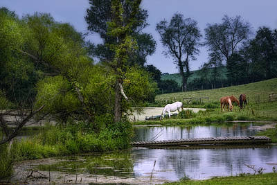 Horses Grazing At Water's Edge Poster by Tom Mc Nemar