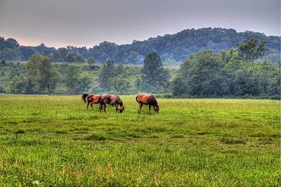 Horses In A Field 2 Poster