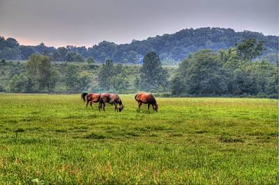 Horses In A Field 2 Poster by Jonny D