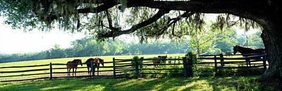 Horses In A Ranch, Hobeau Farms Barn Poster by Panoramic Images