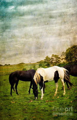 Horses In Field Poster