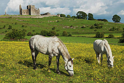 Horses In Front Of Rock Of Cashel Poster by Carl Bruemmer