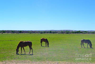Poster featuring the photograph Horses In New Mexico by Utopia Concepts