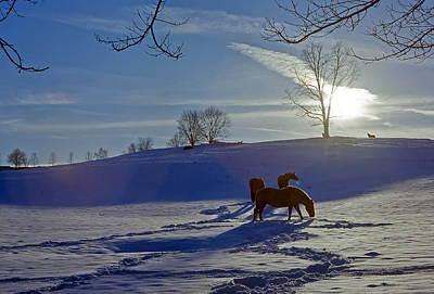 Horses In Snow Poster