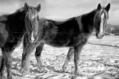 Horses In Winter Coats Poster