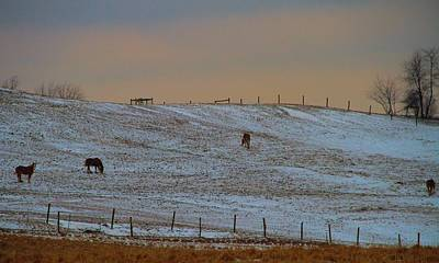 Horses On The Farm In Winter Poster